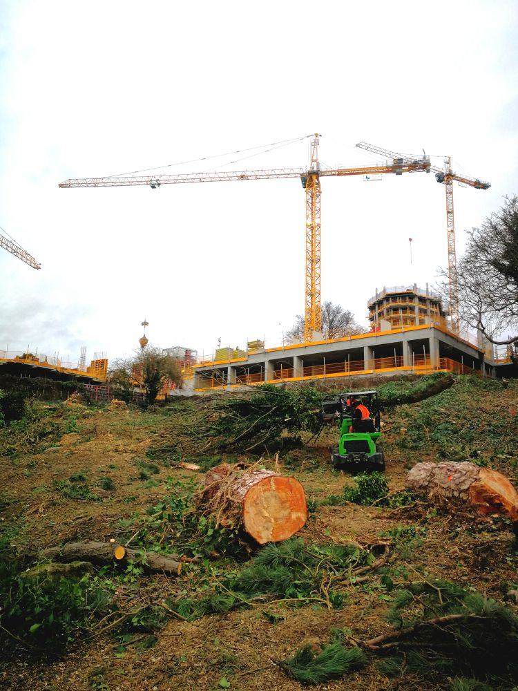 Gimbles Tree Works with a crane at Redrow Maidstone